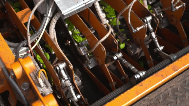 machinery plants seedling lettuce plants in field, uk - modern stock videos & royalty-free footage