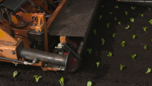 machinery plants seedling lettuce plants in field, uk - automatic stock videos & royalty-free footage