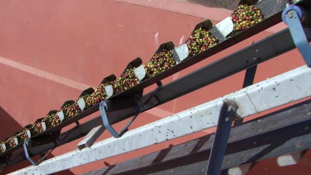 vídeos y material grabado en eventos de stock de  ms tu machines selecting coffee grains / goias, brazil - cereal plant