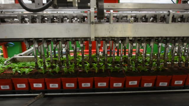 machines transplant vinca seedlings inside a greenhouse at the color point llc facility in granville illinois us on tuesday may 12 2015 shots a... - speichen stock-videos und b-roll-filmmaterial