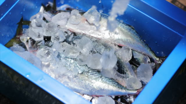 mackerel in the box with ice - packing stock videos & royalty-free footage