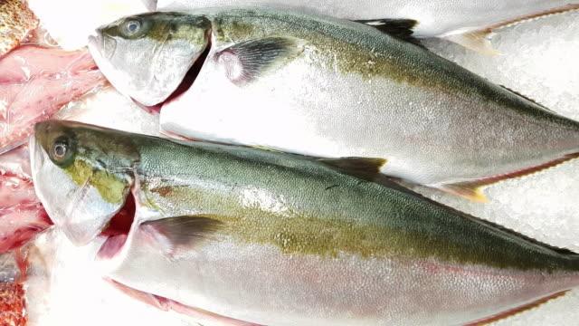 makrelen auf fisch markt display - auslage stock-videos und b-roll-filmmaterial