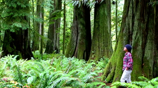 macmillan provincial park cathedral grove vancouver island wonderlust - wonderlust stock videos & royalty-free footage