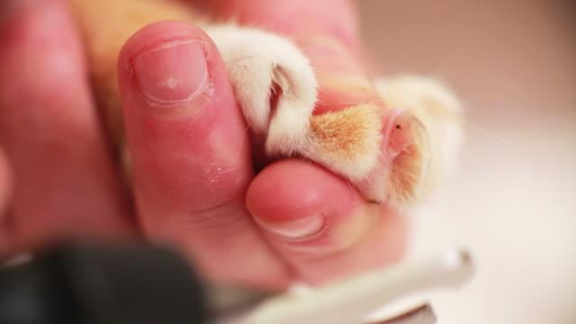 Macro cat getting nails cut
