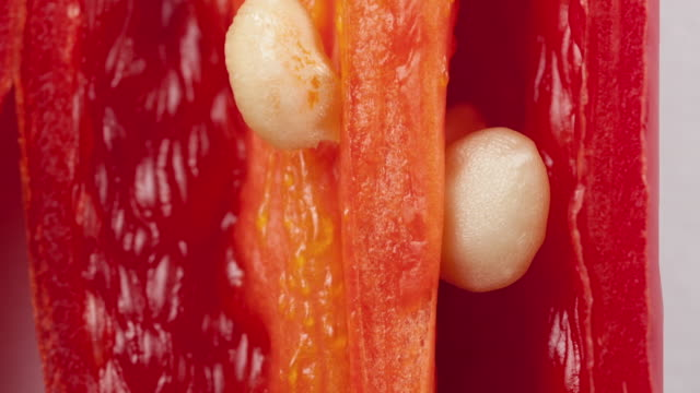 "macro chilli pepper - ""bbc universal"" stock videos & royalty-free footage"