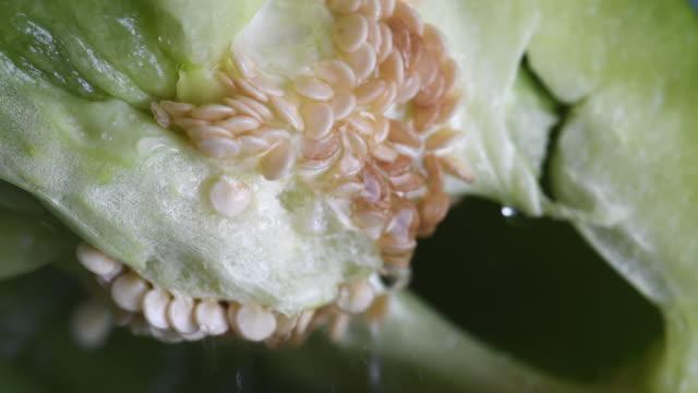 Macro detail of water flowing into the seeds of green bell peppers. Vegetable natural food ingredient, healthy eating