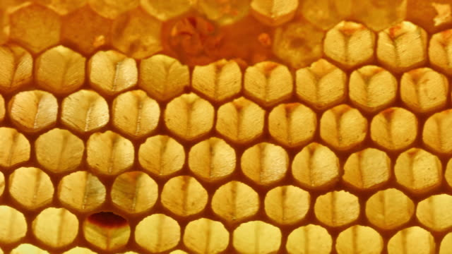 macro dolly: honeycomb - hexagon stock videos and b-roll footage