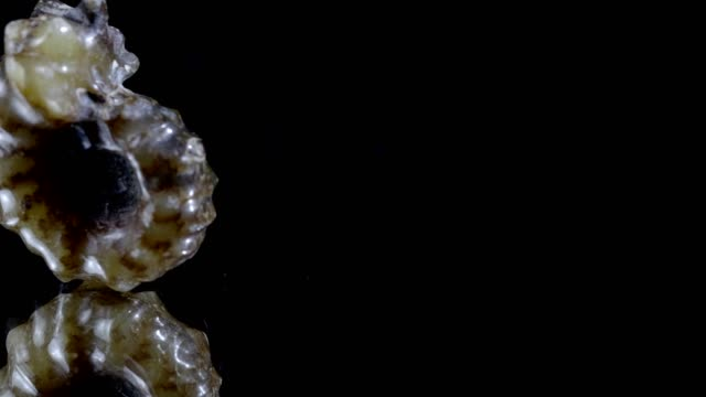 macro dolly: jurassic ammonite on black - ancient stock videos & royalty-free footage
