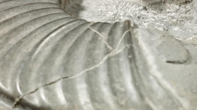 macro dolly: jurassic ammonite on black - jurassic stock videos & royalty-free footage