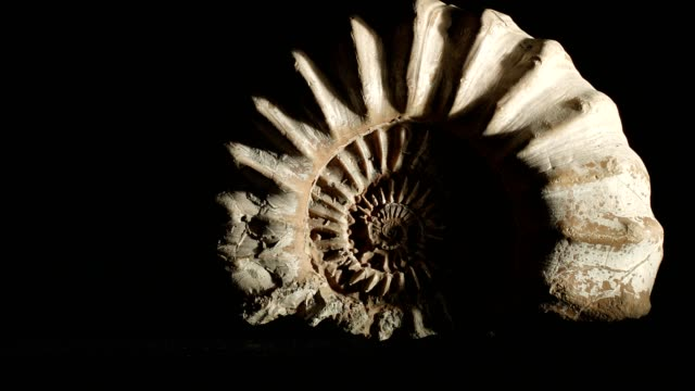 macro dolly: jurassic ammonite on black - stone object stock videos and b-roll footage