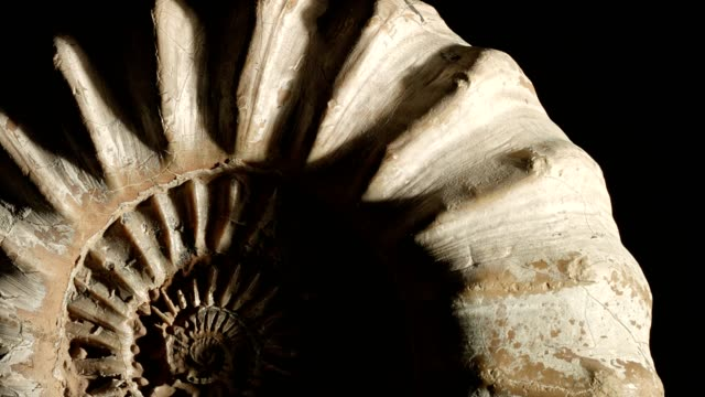 macro dolly: jurassic ammonite on black - animal shell stock videos & royalty-free footage