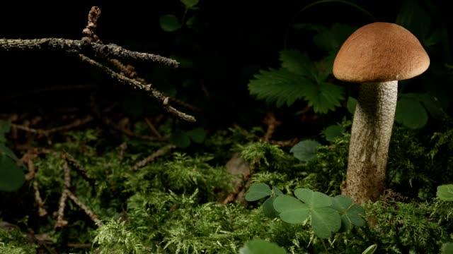 macro dolly: orange bolete - fungus part stock videos and b-roll footage