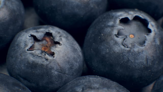 vídeos de stock e filmes b-roll de macro dolly shot of fresh blueberries grapes fruit - fruta