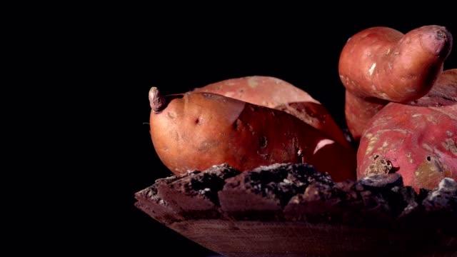 マクロドリー:黒のサツマイモ - サツマイモ点の映像素材/bロール