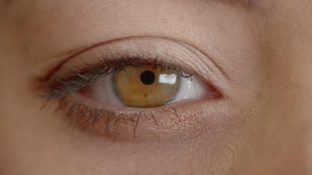 vídeos de stock, filmes e b-roll de macro eye - olhos castanhos