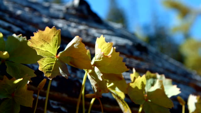 stockvideo's en b-roll-footage met macro pan of plants by log in forest meadow mt. hood spring forest oregon cascade mountains - pacific crest trail