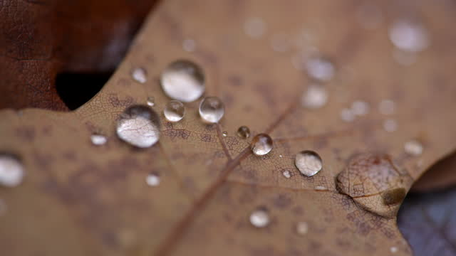 macro pan over water droplets on autumn oak leaves - condensation stock videos & royalty-free footage