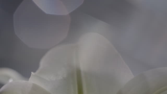 macro shot of a lili flower - extreme close up stock videos & royalty-free footage