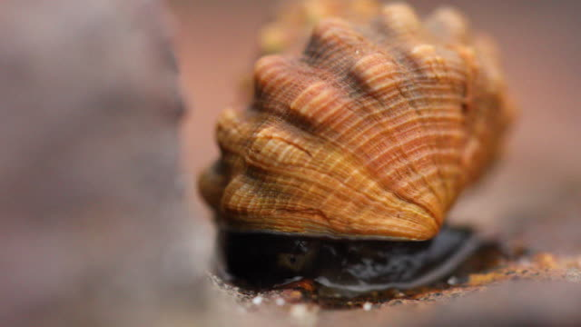 Macro shot of a snail with a textured shell