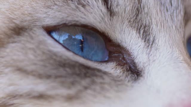 macro shot of cat's eye - mixed breed cat stock videos & royalty-free footage