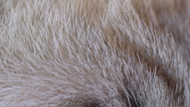 stockvideo's en b-roll-footage met macro shot of cat's fur - dierenhaar