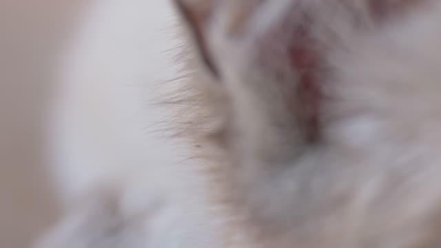 Macro shot of cat's head