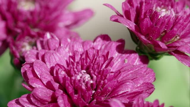 Macro shot of violet flowers.