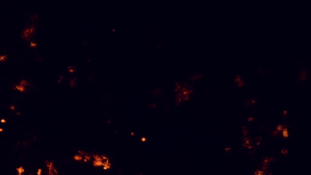 stockvideo's en b-roll-footage met macro staalwol branden slowmotion - kleine scherptediepte