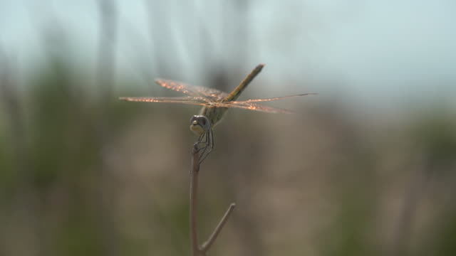hd macro video of dragonfly in nature - selimaksan stock videos & royalty-free footage