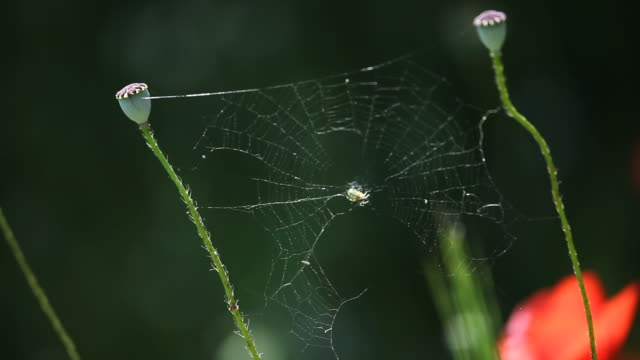 macro video of spider in its web on dark background - selimaksan stock videos & royalty-free footage