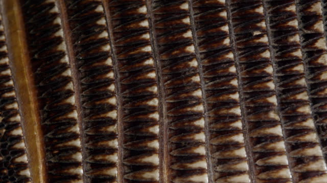 Macro view of Armadillo shell