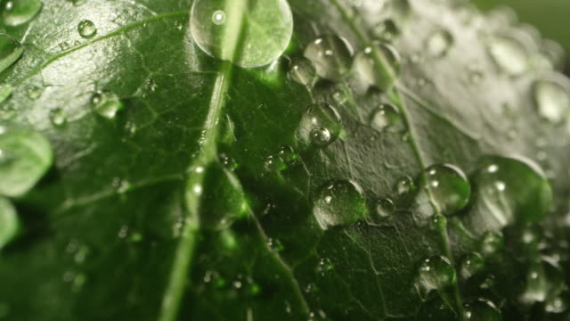 macro view of water droplets on green leaf - bagnato video stock e b–roll