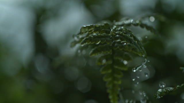 macro water drop on grass slow motion - シダ点の映像素材/bロール