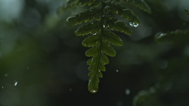 macro water drop on grass slow motion - fern stock videos & royalty-free footage