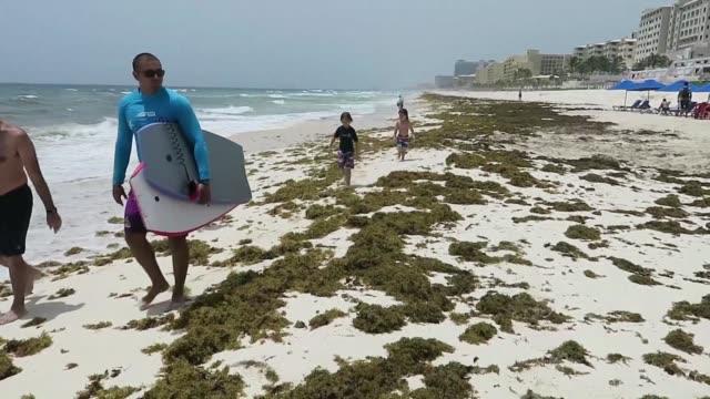 macroalgas conocidas como sargazo invaden este ano las playas caribenas de mexico - cancun stock videos & royalty-free footage