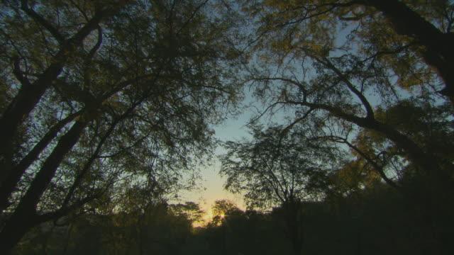Madagaskar Forest Silhouette HQ 4:2: 2