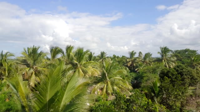 madagascar mahambo tropical coast drone view - palm tree stock videos & royalty-free footage