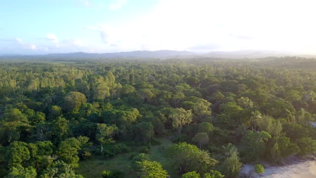 madagascar mahambo tropical coast drone view - rainforest stock videos & royalty-free footage
