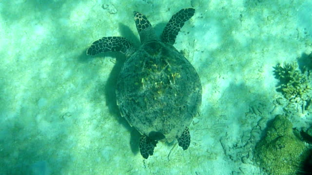 Madagascar underwater sea turtle coral reef fish swim giant clam