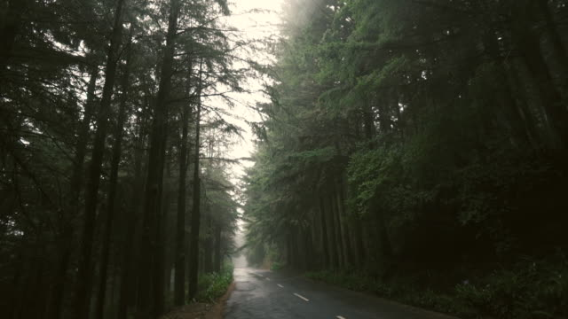 madeira - foggy road - empty road stock videos and b-roll footage