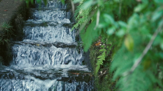 madeira - levada - madeira stock videos and b-roll footage