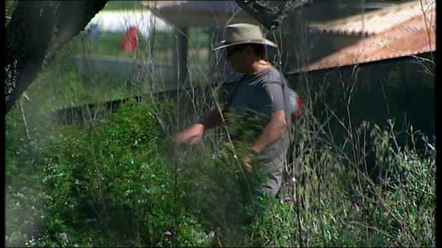madeleine mccann abduction: description of suspect; searchers looking through undergrowth and long grass - マデリン・マクカーン失踪事件点の映像素材/bロール