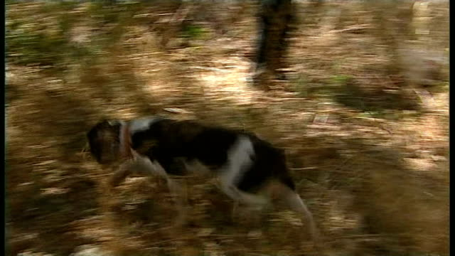 sniffer dogs used in renewed search effort PORTUGAL Praia da Luz EXT British police sifting through dirt near to where Madeleine McCann went missing...