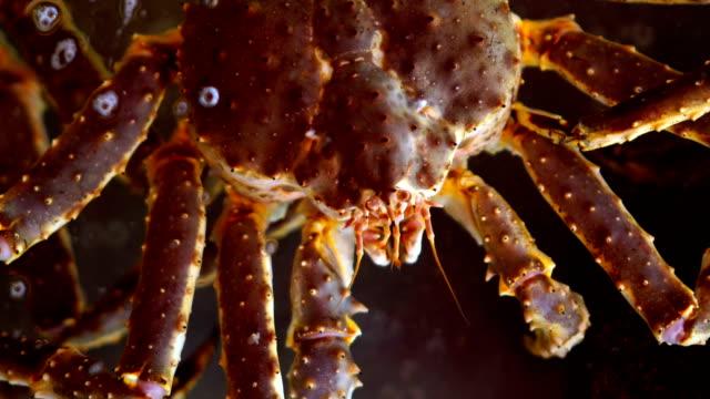 maeda, big crab on morning market in hakodate, hokkaido - crab stock videos & royalty-free footage