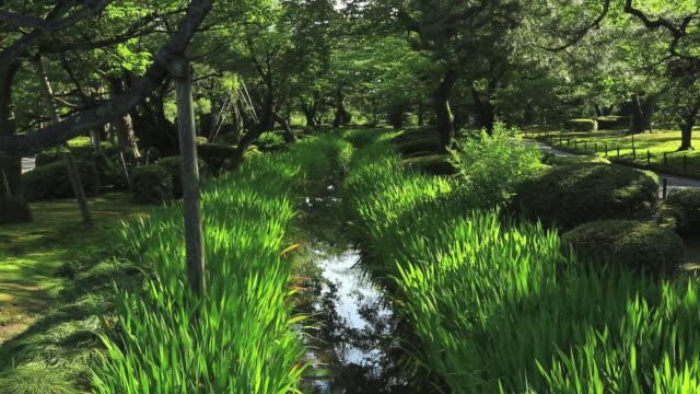ms tu magarimizu in japanese garden kenrokuen, great gardens of japan / kanazawa, ishikawa, japan - kanazawa stock videos and b-roll footage