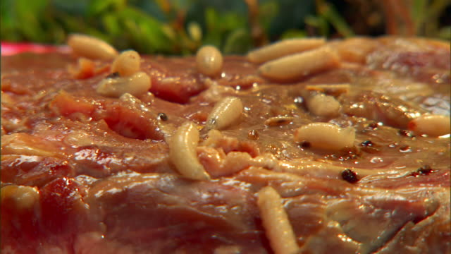 Maggots ooze over rotting meat.