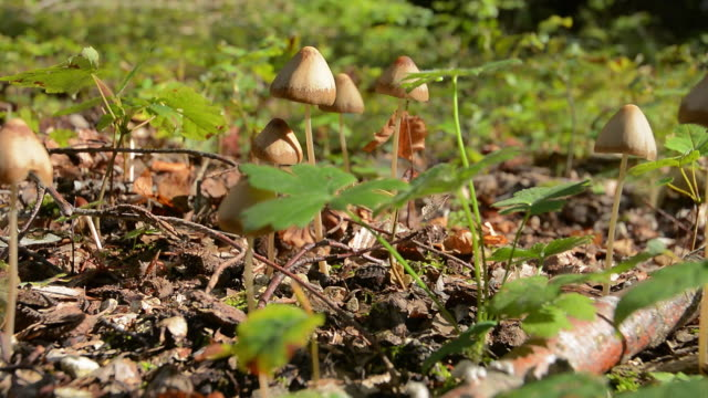 magic mushrooms - mushroom stock videos & royalty-free footage