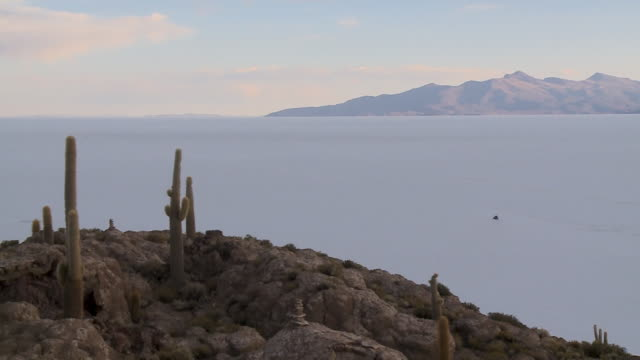 magical salt lake view from cactus island, bolivia - cactus silhouette stock videos & royalty-free footage