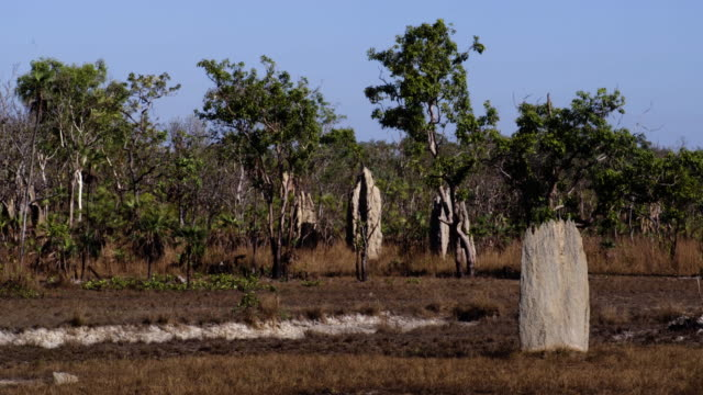 magnetic termite mounds at litchfield national park mid-shot - steve munro stock videos & royalty-free footage