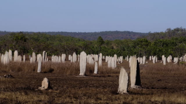 magnetic termite mounds at litchfield national park - steve munro stock videos & royalty-free footage